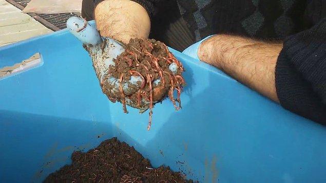 Solucan Gübresi Üretimi // Solucan Çiftliği Açmak
