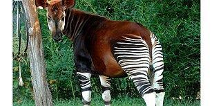Bu İlginç Hayvanların İsimlerini Bilebilecek misin?