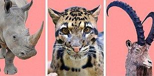 Şimdi Ne Olacak? İnsanlar, Hayvanların %83'ünün Neslinin Tükenmesine Sebep Oluyor!