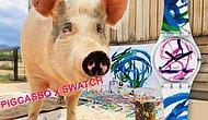 Mezbahadan Kurtarıldıktan Sonra Ünlü Bir Ressam ve Tasarımcı Olan Domuz 'Pigcasso' ile Tanışın!