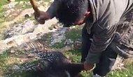 Nesli Tükenmek Üzere Olan Oklu Kirpiyi Sopalarla Öldürülmüşlerdi: 'Hayvanları Koruma Kanunu'na Muhalefet' Suçundan Tutuklandılar