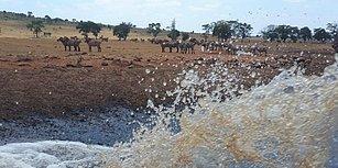 Kuraklık Mağduru Yabani Hayvanlara Her Gün Binlerce Litre Su Taşıyarak ''İnsanlık Ölmemiş'' Dedirten Çiftçi
