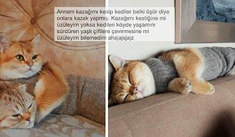 Kedilerle Olan Tatlış İletişimleriyle Yüzümüzde Kocaman Bir Tebessüm Bırakan 15 Kişi