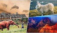 Her Biri Ayrı Büyüleyici! National Geographic'in Instagram Üzerinden Yaptığı Fotoğraf Yarışmasının Kazananları Belli Oldu