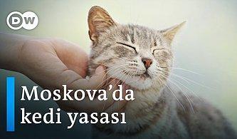 Moskova'nın Sokak Kedilerine Özel 'Kedi Yasası'