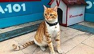 Sadece Erkeklere ve Köpeklere Saldırarak Fenomen Olan Kedinin Artık Bir Yuvası ve Adı Var: Bıcır