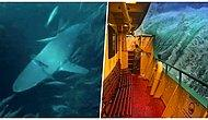 Tatile Para Harcamamak İçin Neden Arayanlara, Deniz Aşıklarını Bile Korkutacak Fotoğraflar
