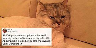 Minnoş Kedisinin Fotoğrafını 'Bilmediğim Bir Şey Söyleyin' Diyerek Paylaşan Fenomene Gelen Bilgi Dolu 22 Cevap