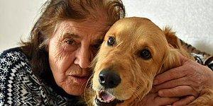 Komşular İstemeyince Mahkeme Kararıyla Evden Atılan Köpek, Şanslı: 'Benden Ayrılırsa Ölür'