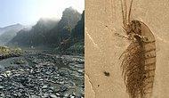 Büyüleyici! Çin'de Çoğu Keşfedilmemiş Türlere Ait '518 Milyon Yıllık' Fosiller Bulundu