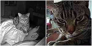 Adamın Geceleri Kedisinin Neler Yaptığını Merak Edip Kamera Yerleştirmesiyle Ortaya Çıkan Görüntüler Sizi Çok Güldürecek!