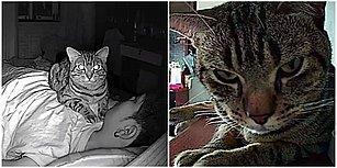 Geceleri Kedisinin Neler Yaptığını Merak Eden Gencin Kamera Yerleştirmesiyle Ortaya Çıkan Görüntüler Sizi Çok Güldürecek!