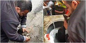 Baygın Köpeğe Suni Teneffüs ve Kalp Masajı Yaptı: Sosyal Medyada 'Kahraman' İlan Edildi