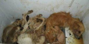 Belediye 'Soğuk Hava Dolabı' Dedi: Seferihisar Hayvan Barınağı'ndaki Ölü Köpekler Tepkilere Neden Oldu