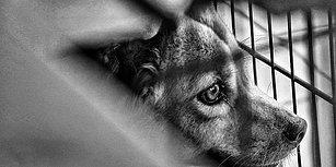 Köpeğe Tecavüz ve Tartışma Yaratan Uzlaşma: 25 Paket Mama
