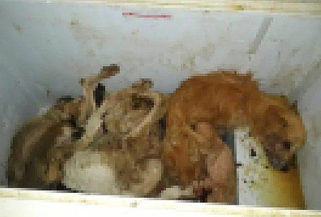 İzmir Seferihisar'da bulunan hayvan barınağında cansız köpeklere ait görüntüler bulundu.