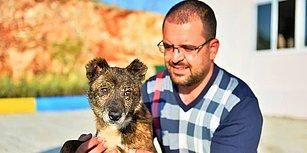'Ayaz'ın Dünyası Aydınlandı! Mardin'de Bir Köpeğe Katarakt Ameliyatı Yapıldı