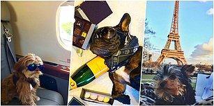 Özel Jetlerden Havuz Partilerine Dünyada Cenneti Yaşayan Instagram'ın En Zengin Köpekleri