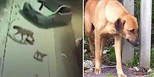Yolda Emzirdiği İki Yavrusunu Araç Çarpması Sonucu Kaybeden Köpeğin Yürekleri Dağlayan Çaresizliği