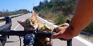 Dünya Turuna Çıktığı Sırada Karşılaştığı Kediyi Yanına Alan Bisikletlinin Kaydettiği Muhteşem Görüntüler
