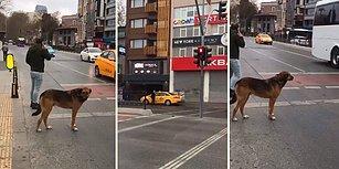 Yayaya Yanan Kırmızı Işığa Aldırmadan Geçen İnsanlar ve Yeşil Işığın Yanmasını Bekleyen Köpek