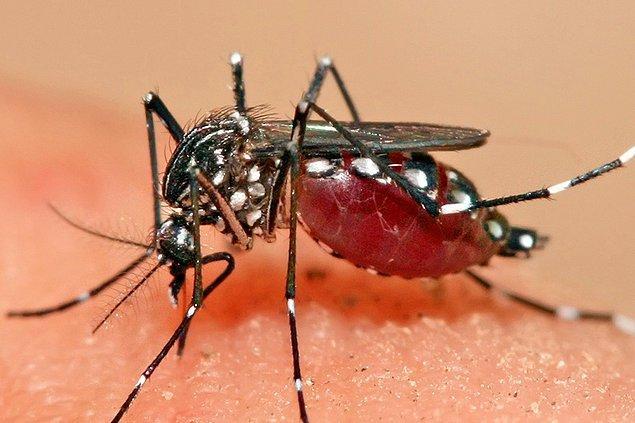 3. Sivrisinekler genellikle sadece meyve suyu ve nektarı içerler, kan içen sivrisinekler hamiledir.
