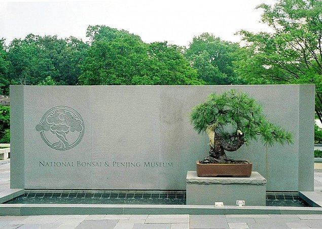 4. 400 yıllık bir bonsai ağacı 1945 yılında Hiroşima'ya yapılan nükleer saldırıyı atlatmıştır. Daha sonra ABD'ye hediye edilen bu ağaç halen Washington'daki Ulusal Botanik Bahçesi'nde durmaktadır.