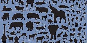 Bu Hayvanları Tüylerinden Tanıyabilecek misin?