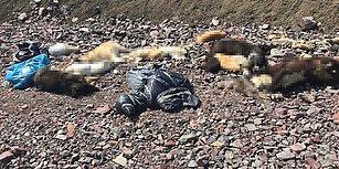 Ankara'da Bir Vahşet Daha: Onlarca Köpek Ölü Bulundu