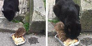 Beraber Aynı Kaptan Yemek Yiyen Kedi ve Farenin Muhteşem Dostluğu