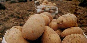 Patates İçin Yeni Kararname: Sıfır Gümrük Vergisi Uygulaması Uzatıldı