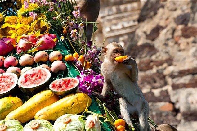 14. Maymun Büfesi Festivali, Tayland