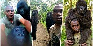 Nesli Tükenmek Üzere Olan Goriller Kendilerini Avcılara Karşı Koruyan Bekçileriyle Selfie Çektirdi