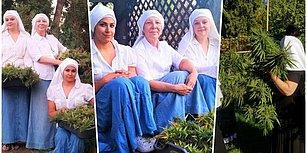 ABD'de Bir Manastırda Ürettikleri Kenevirlerden Yılda 6,5 Milyon TL Kazanan Çılgın Rahibeler