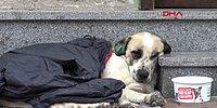 Yağmurda Islanan Sokak Köpeğine Montunu Veren Çocuk!