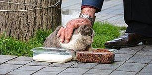 'Evlatlarım' Dediği Sokak Hayvanlarına Çocukları Gibi Bakan Vahap Dede
