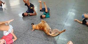 Çocukların Dans Dersinde Yaptıkları Hareketlere Eşlik Eden Köpek