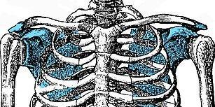 İnsan İskeletindeki Bu Kemiklerin Adını Bilebilecek misin?