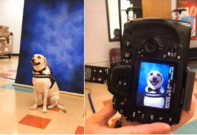 12. Okul yıllığı için fotoğrafı çekilen kılavuz köpek...