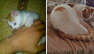 Evcil Hayvanlarının Bebeklik ve Şimdiki Hallerini Paylaşarak Gören Herkesin Yüzünde Kocaman Bir Gülümseme Bırakan İnsanlar