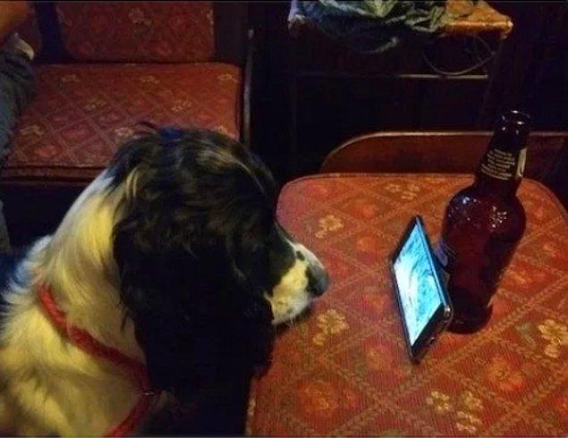 """26. """"Köpeğimin barda canı sıkıldı ve ona sincap videoları açtık."""""""
