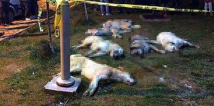 Ankara'da 16 Köpeği Zehirleyerek Öldürmüşlerdi: Mala Zarar Vermekten 5 Yıl 4 Aya Kadar Hapis İstemi