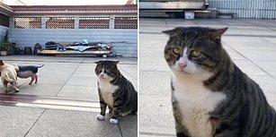 Sevimli Görünüşü ve Komik Bakışlarıyla İnsanları Kendine Hayran Bırakan Kedi 'Ah Fei' ile Tanışın! 😻