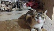 Bursa'da Vahşet! Beş Kedi Yavrusu Başları Kesilmiş Halde Bulundu