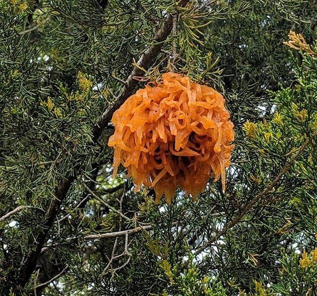 """16. """"Kuzey Carolina'da bir ağaçta buldum. Yaklaşık bir yumruk boyutunda."""""""