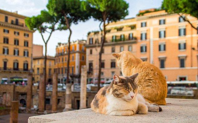 4. Roma'da Jül Sezar'ın öldürüldüğü tapınak, günümüzde yüzlerce kedinin sığındığı bir yer haline gelmiştir.