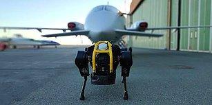 3 Tonluk Bir Uçağı Çekebilen Robot Köpek: HyQReal