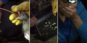 Plastiklerin Ekolojik Dengeye Etkisini Tüm Çıplaklığıyla Göreceksiniz: Anne Kuş, Yavrusunu Yiyecek Zannederek Plastikle Beslemiş!