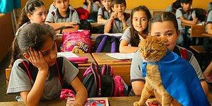 Öğrencilerden Hüzünlü Veda: Türkiye'nin Gündemindeki Kedi Tombi Yurt Dışına Gidiyor 😿