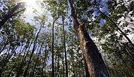 Diplomadan Önemli Şeyler Var: Filipinler'de Öğrencilere Mezuniyet İçin 10 Ağaç Dikme Şartı